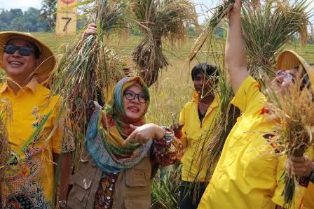 Ketgam : Panen padi bersama Mba Tutut