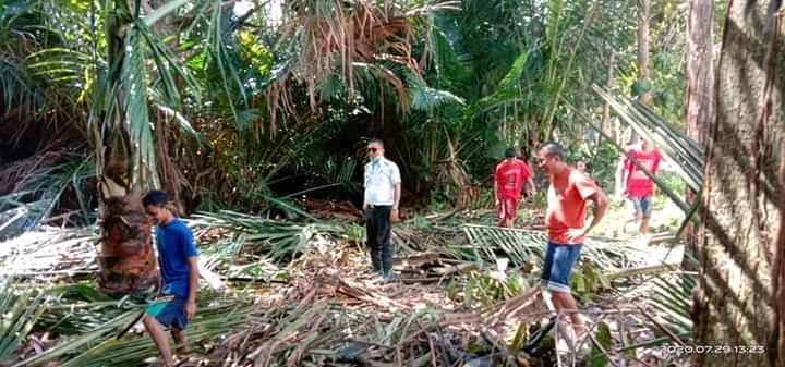 Pembukaan lahan Demplot pengelolaabn Sagu yang di garap oleh Dinas Ketahanan Pangan Konawe